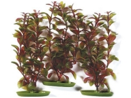 Rostlina Red Ludwigia 3ks