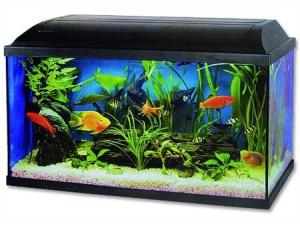 Akvárium set Pacific 54l